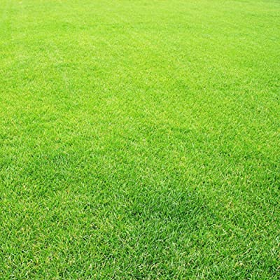 XKSIKjian's Garden 300Pcs Greensward Grass-plot Lawn Grass Seeds Ornamental Plant Home Yard Office Decor Non-GMO Seeds Open Pollinated Seeds for Planting : Garden & Outdoor