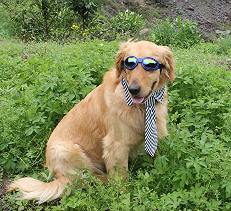 Adatti gli occhiali da sole di grandi e medie dimensioni dell'animale domestico, gli occhiali di protezione del vento (plastica, fascia elastica) , black