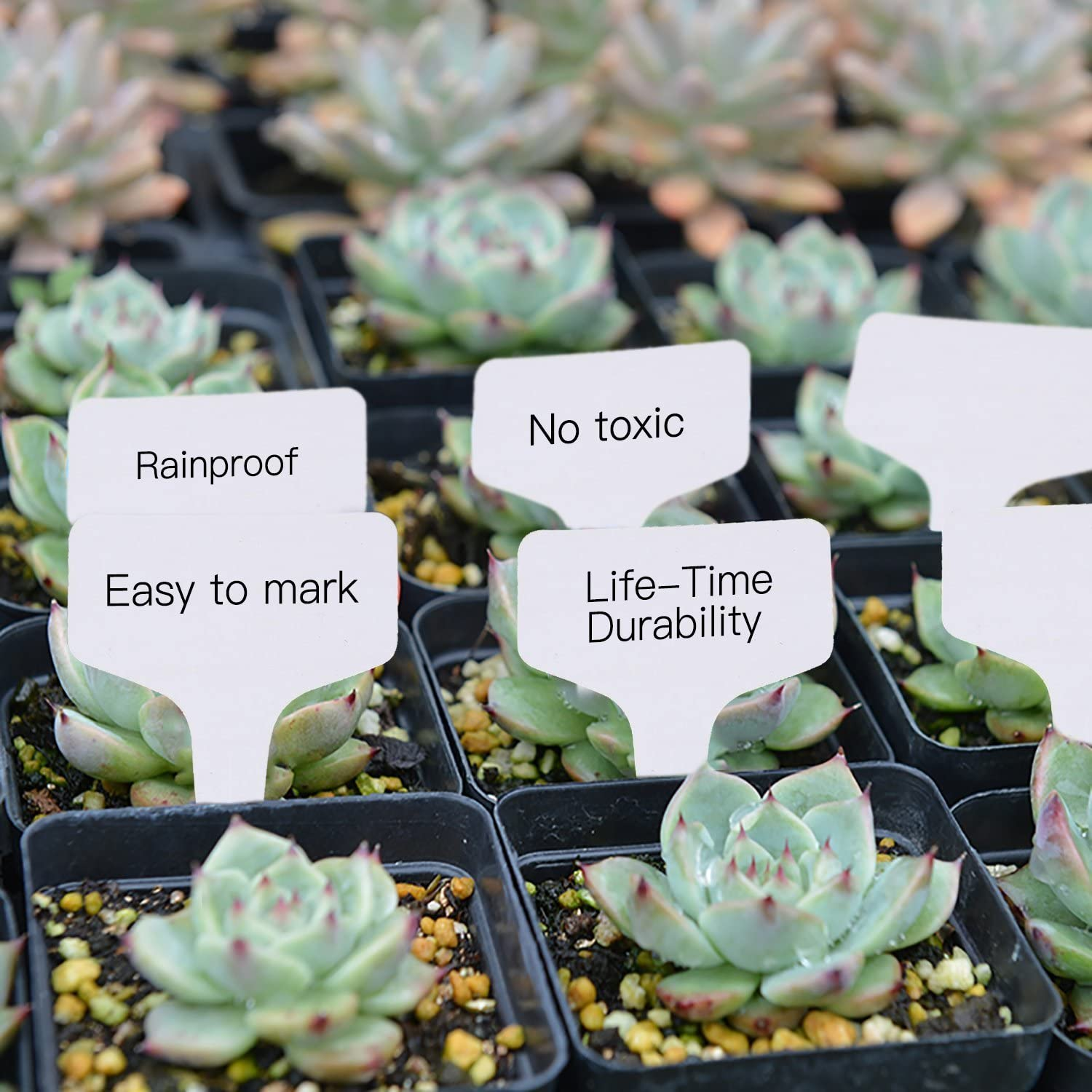 Kalolary 100 Pcs 5 x7cm Plastic Plant T-Type Tags White Waterproof Nursery Garden Markers Re-usable Plant Labels