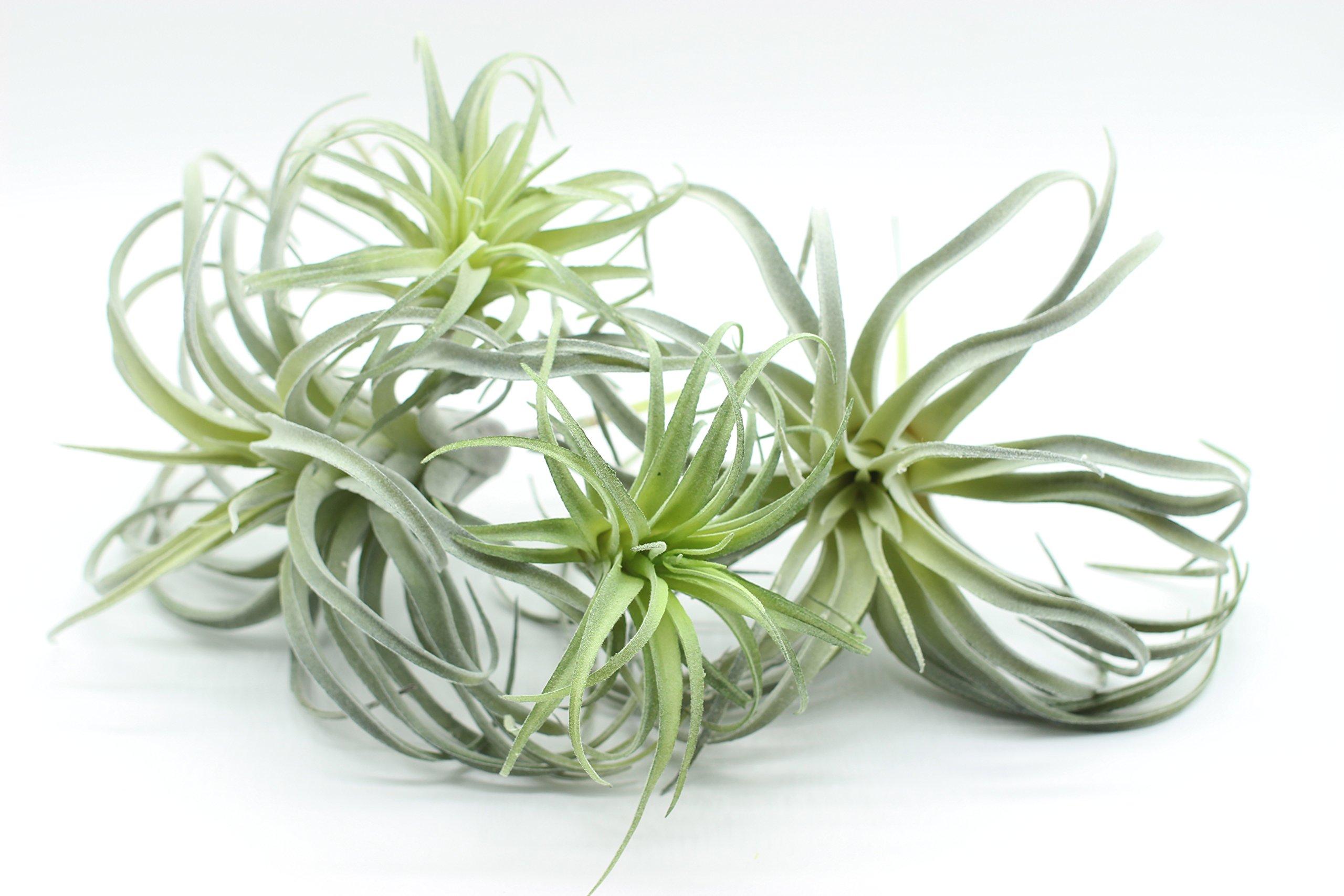 Yokoke-Artificial-Pineapple-Grass-Air-Plants-Fake-Flowers-Faux-Succulents-Flocking-Tillandsia-Bromeliads-Home-Garden-Decor-4-Pcs-11-Inches-Assortment