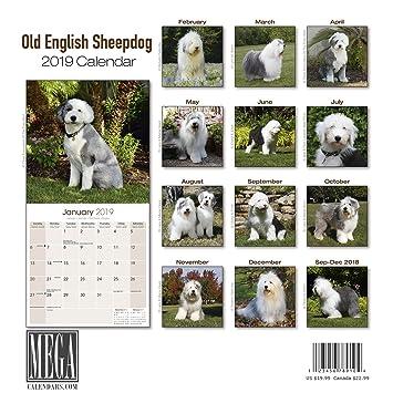 amazon com old english sheepdog calendar 2019 dog breed calendar