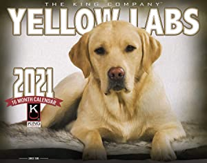 2021 Yellow Lab Dogs Wall Calendar (Single Unit) 16-Month X-Large Size 14x22, Dog's by The KING Company-Monster Calendars