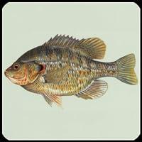 Quiz de curiosidades de espécies de peixes