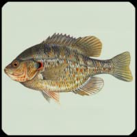 Pesce specie Trivia Quiz