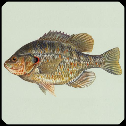 Fish Species Trivia Quiz