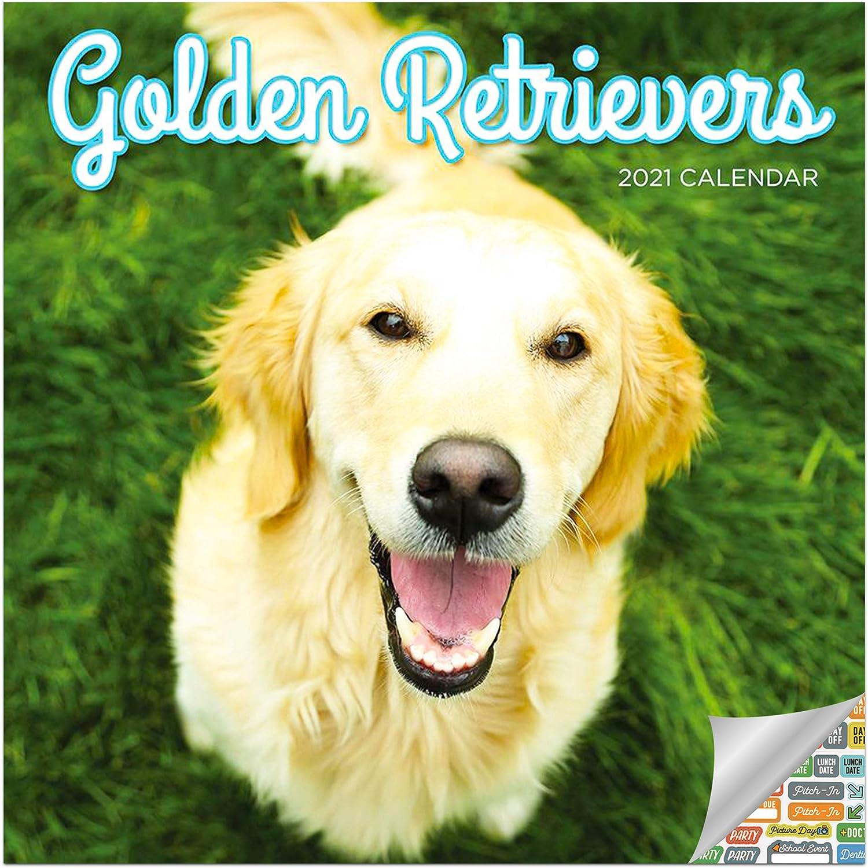 Golden Retrievers Calendar 2021 Bundle - Deluxe 2021 Golden Retrievers Wall Calendar with Over 100 Calendar Stickers