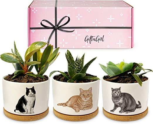 GIFTAGIRL Cat Gifts for Cat Lovers - Crazy Cat Lady Gifts or Cat Themed Gifts Like Our Cat Planters, are Great Cat Lover Gifts for Women and Cat Stuff for Cat Lovers. Nice Cat Mom Gifts for Women