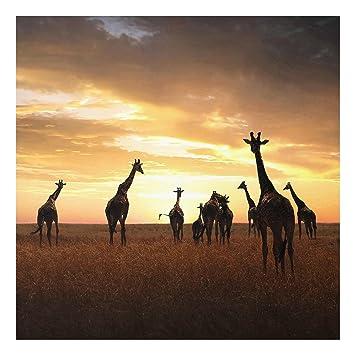 Impression Sur Verre Famille Girafes Carré 11 Image Sur Verre