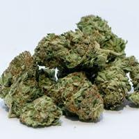 My Cannabis Channel