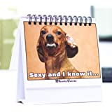 Funny Office Gift – Doggy Moodycards! Great Cubicle Accessories - Make Everyone Laugh with These Lovable Dog Memes –Hilarious Dog Pictures Tells Everyone How You Feel - Fun, Useful & Adorable