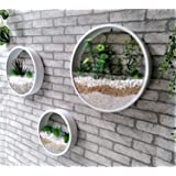 Ecosides Pack of 3 White Round Wall Hanging Plant Terrarium Iron Planter Wall Hanging Container Succulent Plant Pots in Mixed