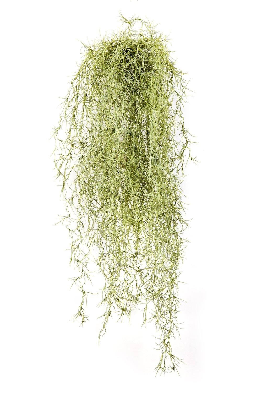 Set 2 x di Viticcio di Tillandsia Usneoides artificiale IRMENA con 115 rametti, verde-giallo, 80 cm - 2 pezzi di Cespuglio decorativo / Pianta pendente - artplants
