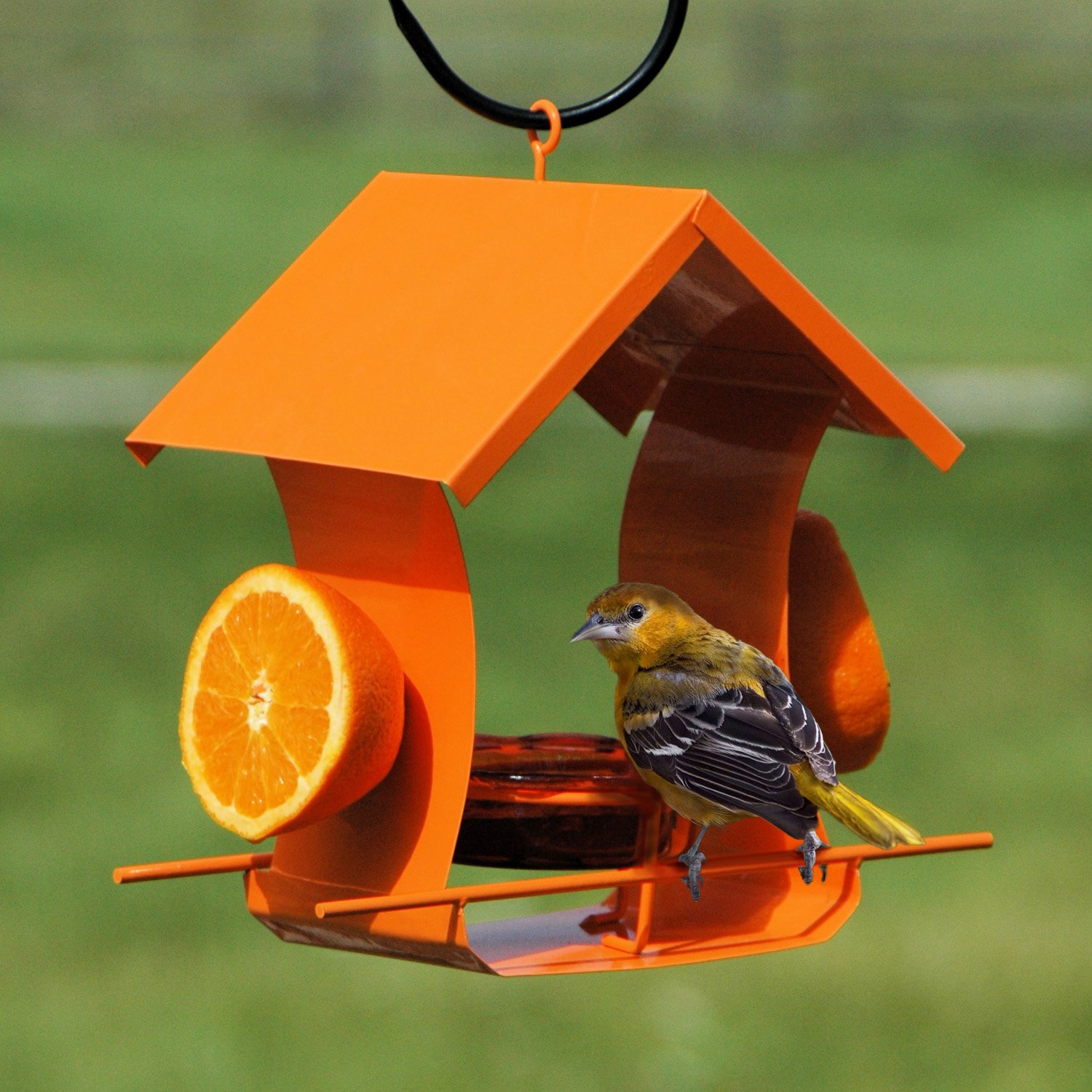 grape best baltimore kip watch at oriole ladage jelly youtube feeder