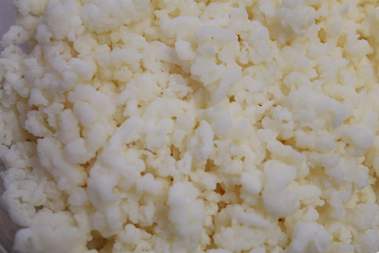 kefir grains. kefir grains