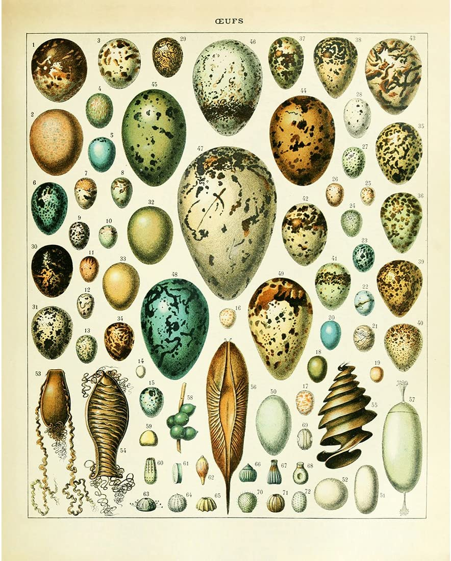Poster Print Vintage Biology Botanical Science Wall Decor Sea Creature Animals