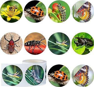 Outus 400 Pegatinas de Insectos Realistas 1,5 Pulgadas Pegatinas de Pared con Patrón de Insecto Rollo de Etiquetas Auto Adhesivas Redondas con 9 Estilos para Fiesta Aprendizaje de Animal, 4 Rollos: Amazon.es: