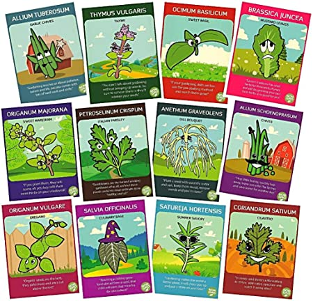S 4,000 12 Individual Seed Packets Incl Non-Gmo Culinary Herb Seed Collection