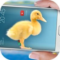 Duck in phone Quacking joke