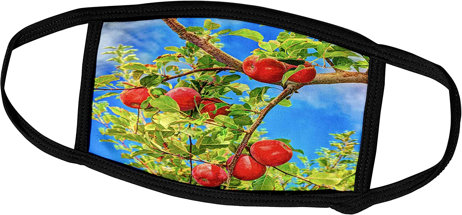 3dRose Jonagold Apples on Trees, Yakima Valley, USA - Face Covers (fc_231826_2)