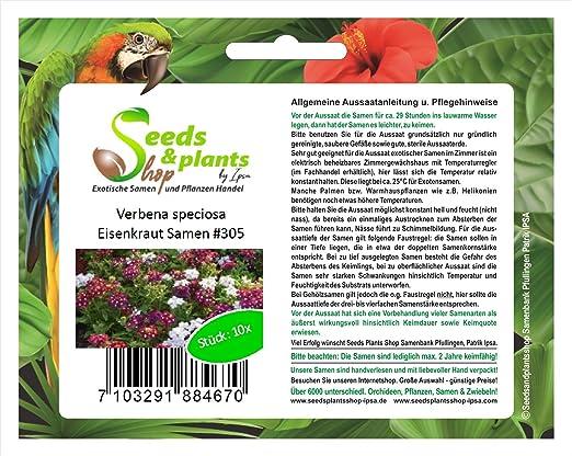 10 semillas de Verbena Verbena speciosa del jardín flores casa planta #305: Amazon.es: Jardín