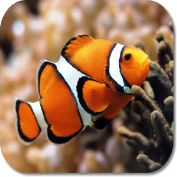 Amazon com: Clown Fish HD Wallpapers: Appstore for Android