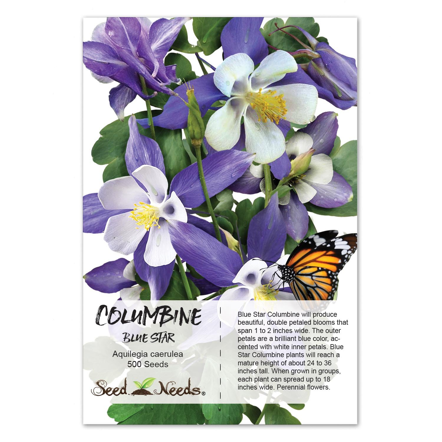 Amazon package of 500 seeds blue star columbine aquilegia amazon package of 500 seeds blue star columbine aquilegia caerulea non gmo seeds by seed needs columbine plants garden outdoor izmirmasajfo
