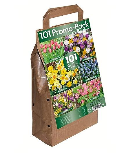Greenbrokers Collection Lot de 101 bulbes de Fleurs 6 ...