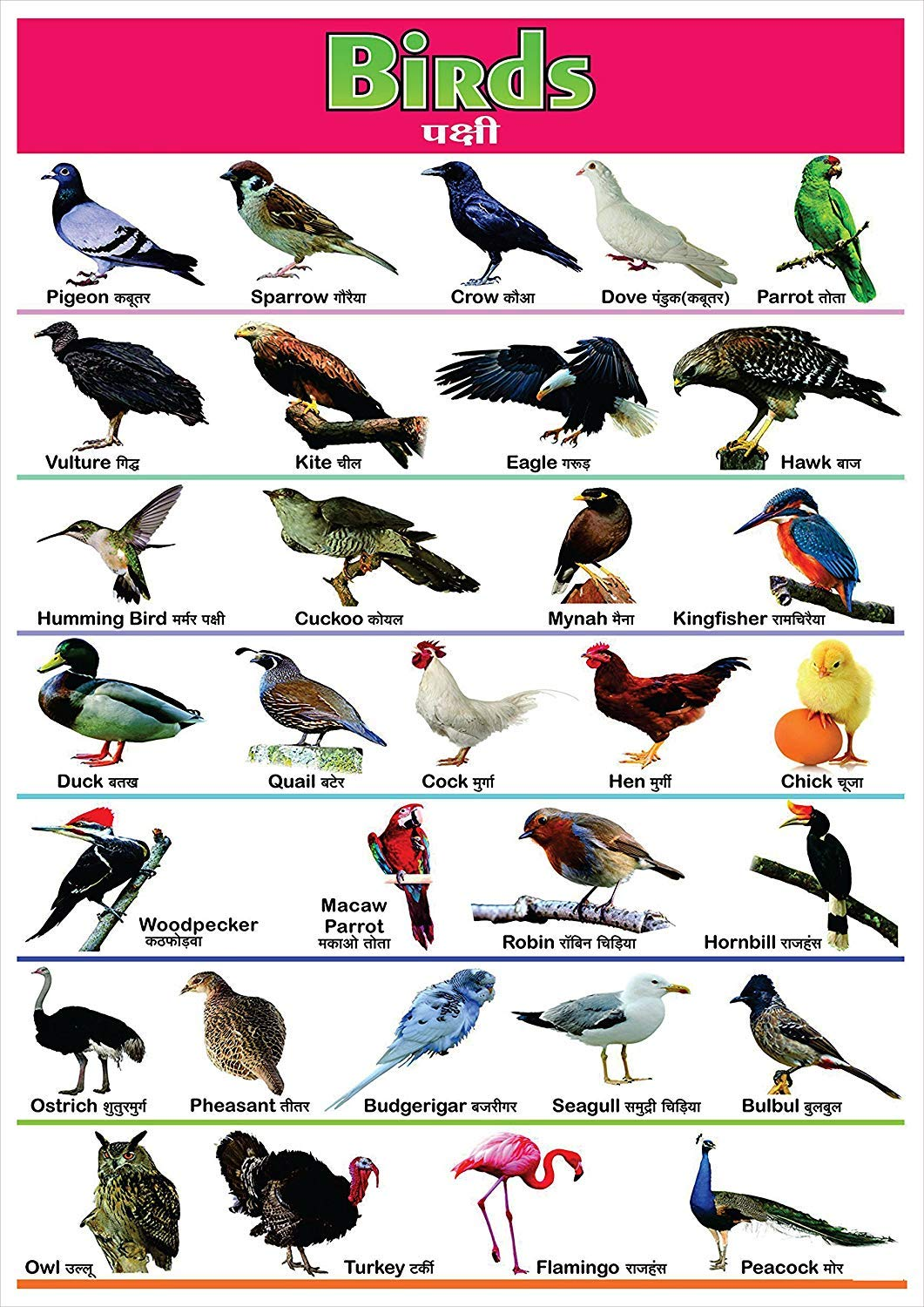 100yellow Paper Birds Name Printed Poster Educational Poster Wall Chart Multicolour 12 X 18 Amazon In Home Kitchen