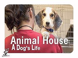 Animal House: A Dog's Life  Season 1