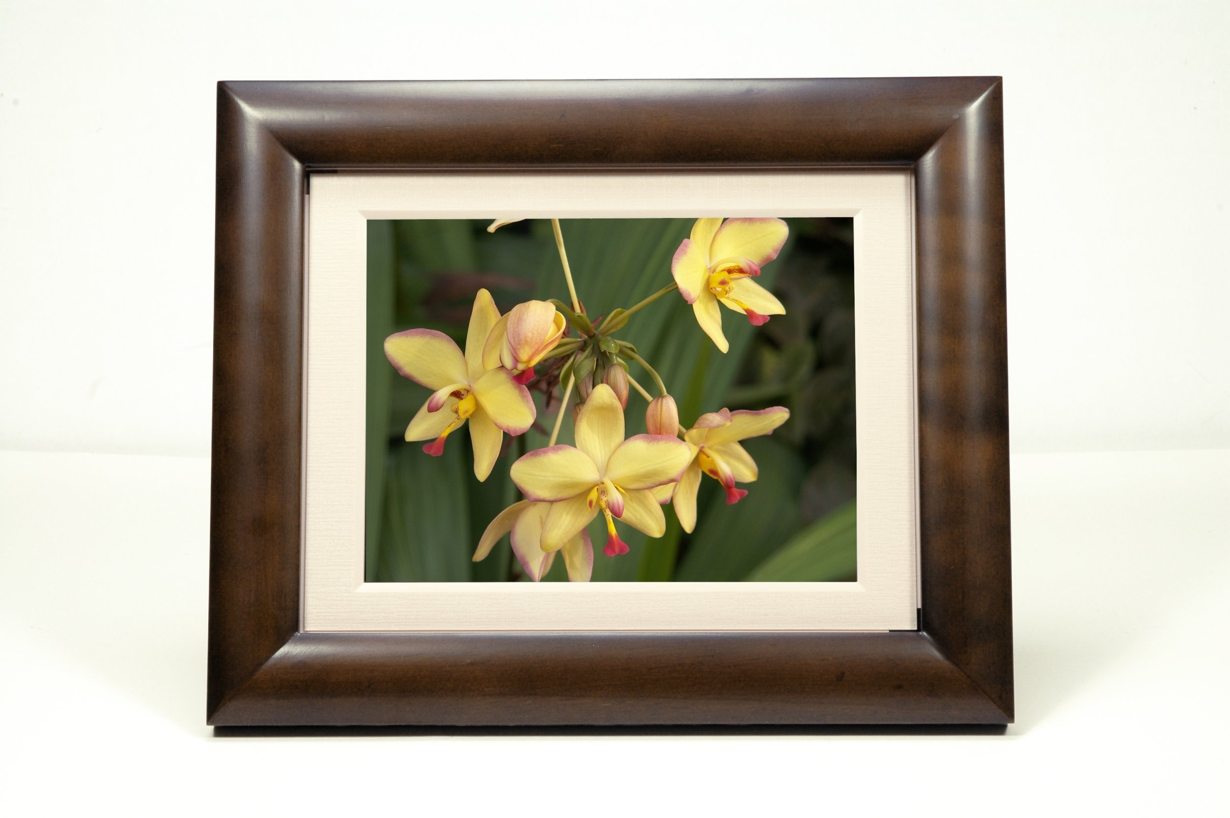 SmartParts SP800 8-Inch Digital Picture Frame