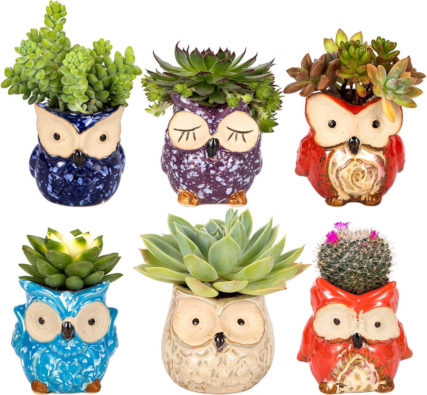 Owl Succulent Pot Ceramic Cute Animal Plant Planters Flowing Glaze Base Serial Set Succulent Plant Pot Cactus Plant Pot Flower Pot Container Planter Bonsai Pots with A Hole Perfect Gift Idea 6pcs