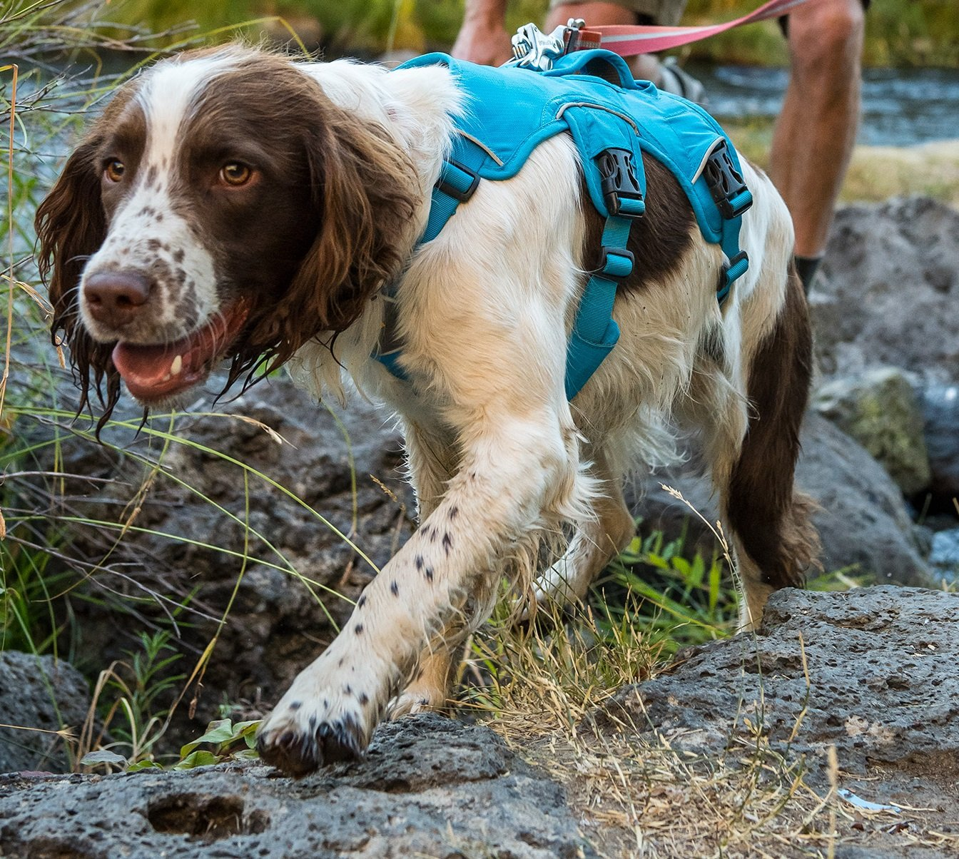 RUFFWEAR NEW 2017 WEB MASTER DOG HARNESS ♦ SECURE REFLECTIVE SUPPORTIVE MULTI USE ♦ ALL SIZES and COLORS (Large / XL, Blue Dusk)