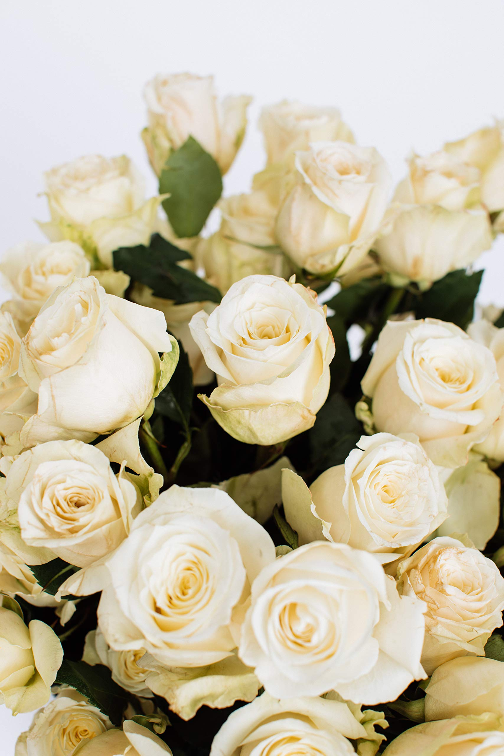 Benchmark Bouquets 50 White Roses Farm Direct (Fresh Cut Flowers) by Benchmark Bouquets (Image #4)
