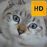 Baby Animals Wallpaper HD