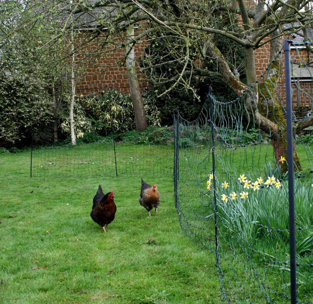 Electrifiable Chicken Netting - 25 Metres With Extra Poles Hotline