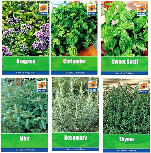 COLECCIÓN DE HIERBAS 4- selección de 6 semillas frescas de hierba ...