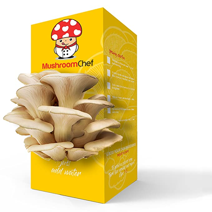 Oyster Mushroom Growing Kit Terrarium T101 Edible for Chef Cooking, Salads, Pasta, and Vegan-Friendly; Gardening Mushroom Supplies