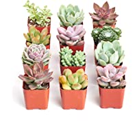 Deals on 12 Shop Succulents Premium Pastel Collection Live Succulent Plants