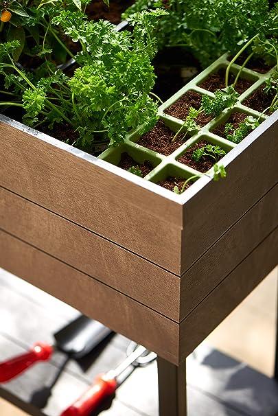 Keter - Mini huerto en casa Urban Bloomer con base para cultivo ...
