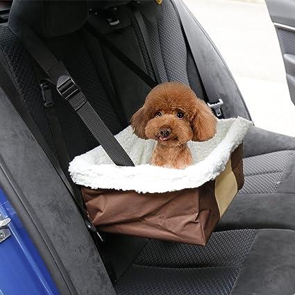 viajar con tu perro en auto