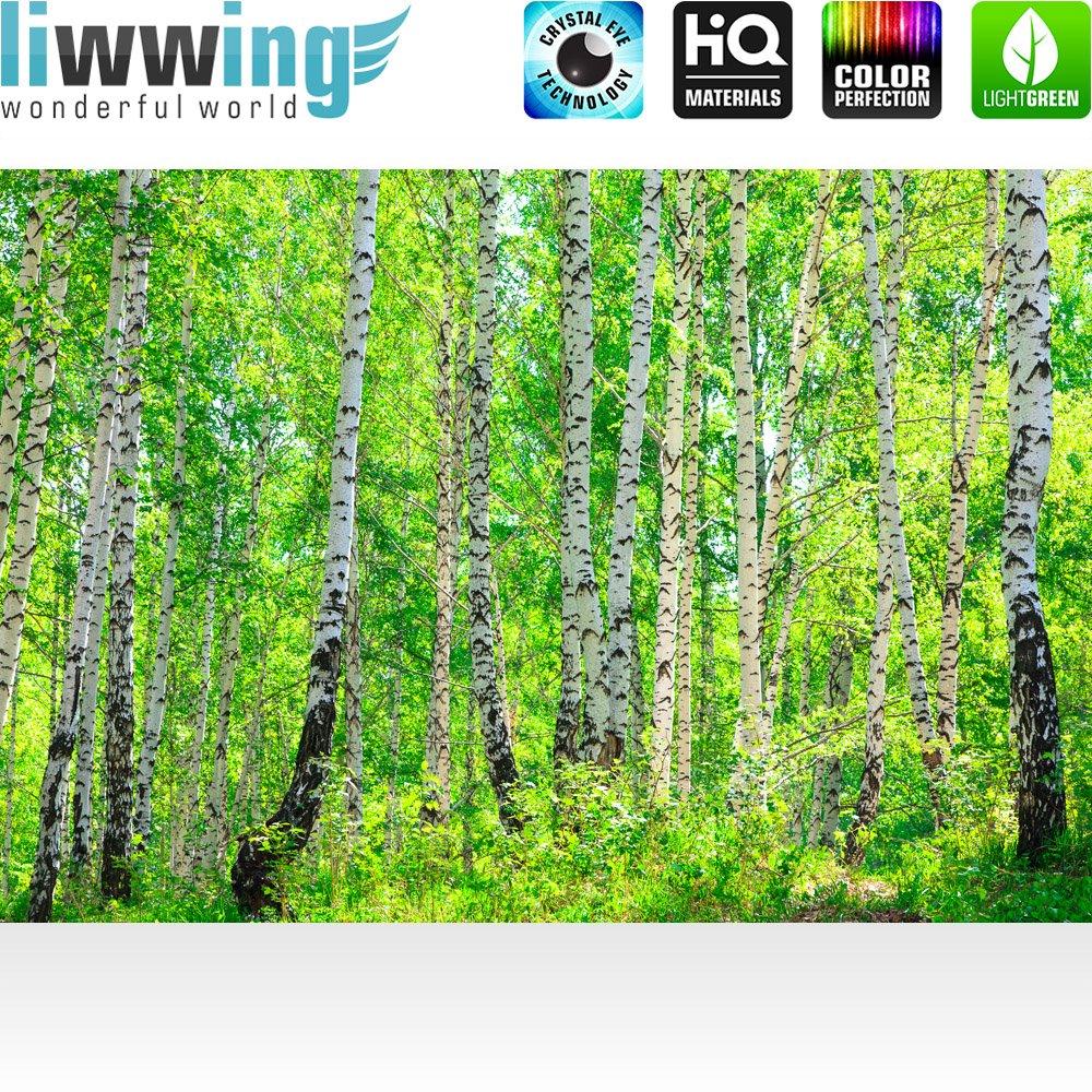Fototapete Fototapete Fototapete 300x210 cm - ALLE TOPSELLER auf einen Blick   Vlies PREMIUM PLUS - SUNNY BIRCH FOREST - Birkenwald Bäume Wald Sonne Birkenhain Birke Birken Gras Natur Baum - no. 112 B01H75P7CQ Wandtattoos & Wandbilder 8e057c