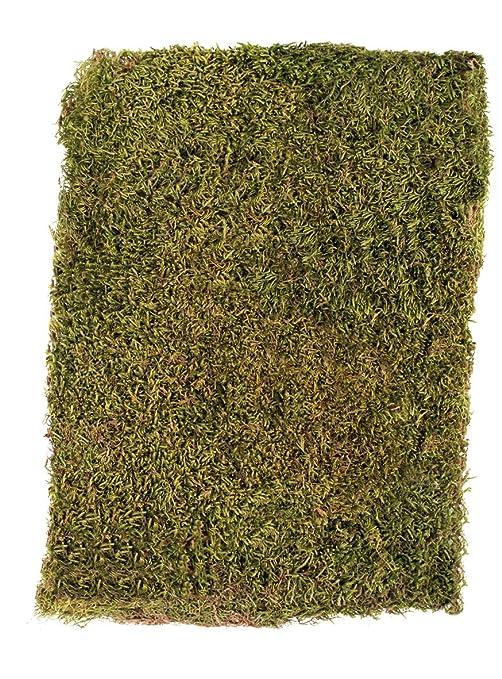 Rayher Plattenmoos, getrocknet, Beutel 100g, Moos, grün/braun, 29 x 23 x 5 cm