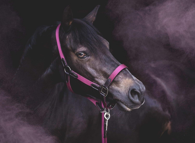 in versch RIDERS CHOICE Halfter-Set inkl Halfter f/ür Pferde Pony, VB, WB F/ührstrick Farben