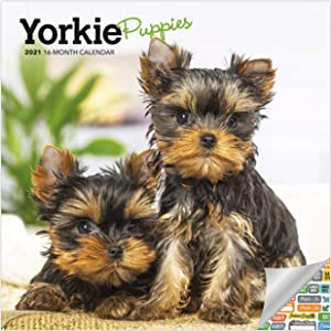 Yorkie Puppies Calendar 2021 Bundle - Deluxe 2021 Yorkshire Terrier Puppies Mini Calendar with Over 100 Calendar Stickers (Yorkie Puppies Gifts, Office Supplies)