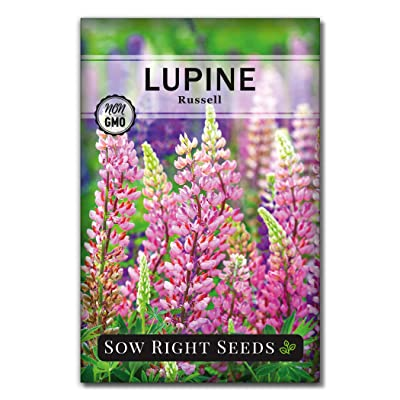 Sow Right Seeds - Russell Lupine Seeds to Plant - Full Instructions for Planting and Growing a Perennial Flower Garden; Non-GMO Heirloom Seeds; Wonderful Gardening Gift (1) : Garden & Outdoor