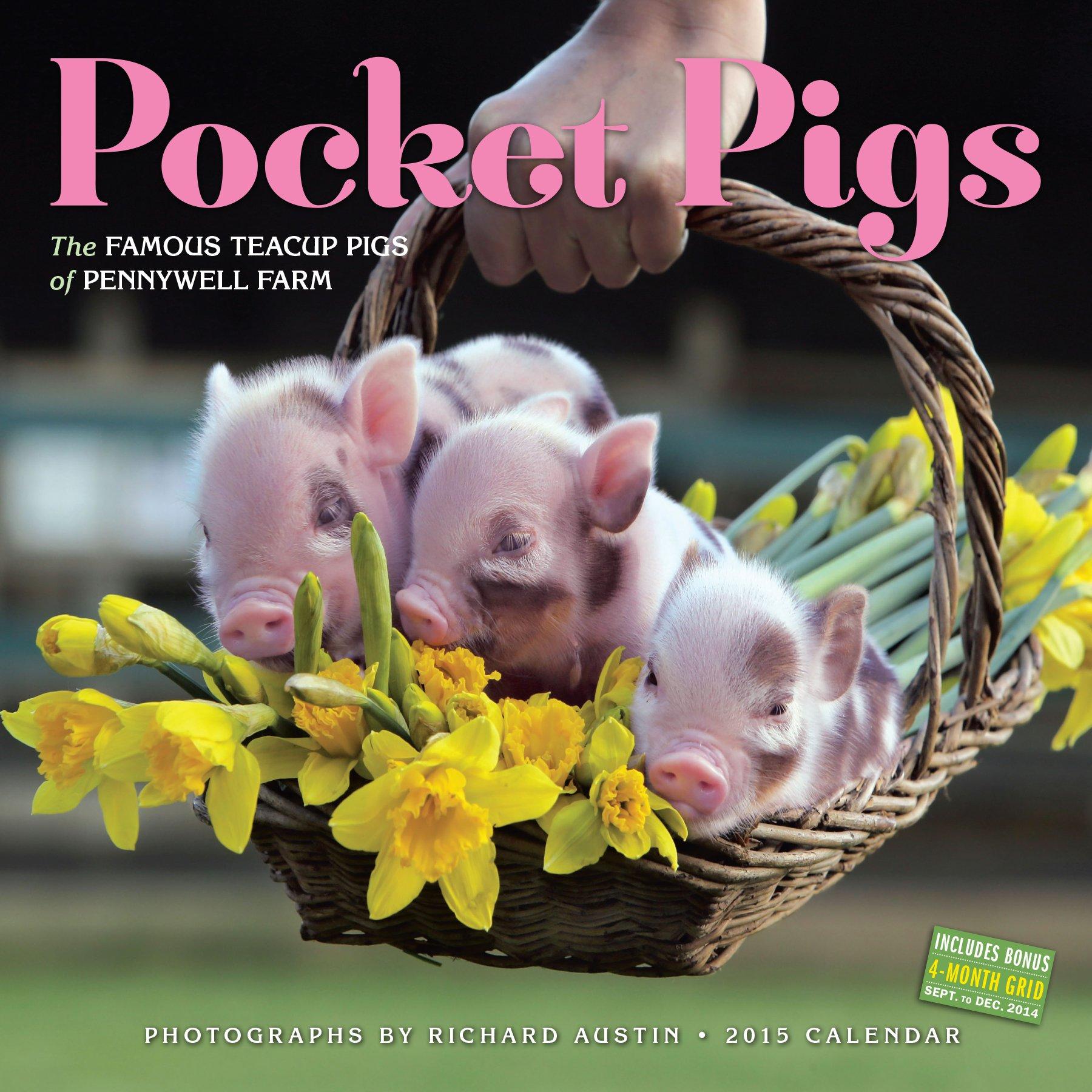 Pocket pigs 2015 wall calendar amazon richard austin books voltagebd Choice Image
