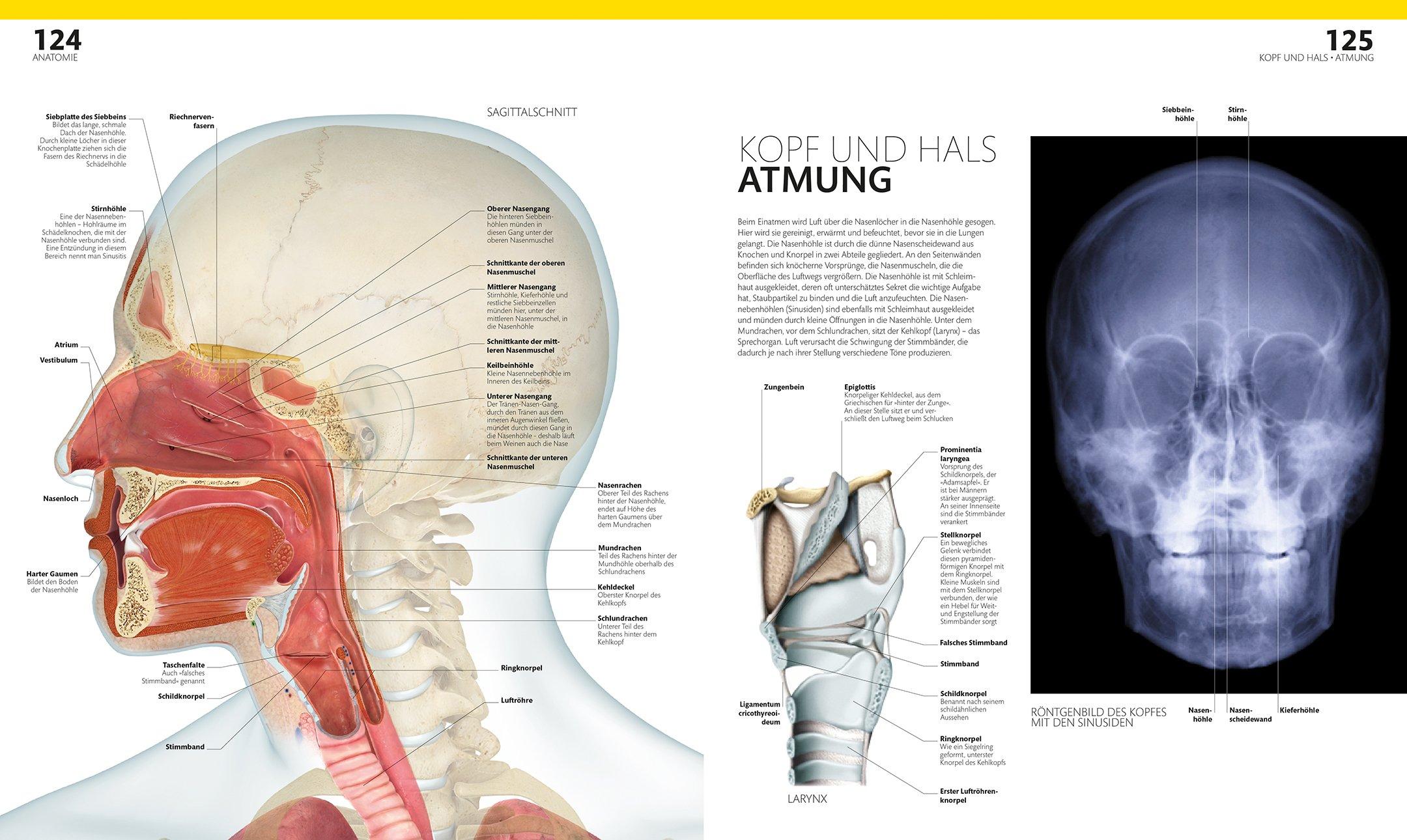 Anatomie und Physiologie: Die Bild-Enzyklopädie: Amazon.co.uk: Alice ...