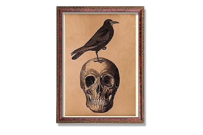 Amazon Vintage Anatomy Print Crow Poster Skull Decor Antique