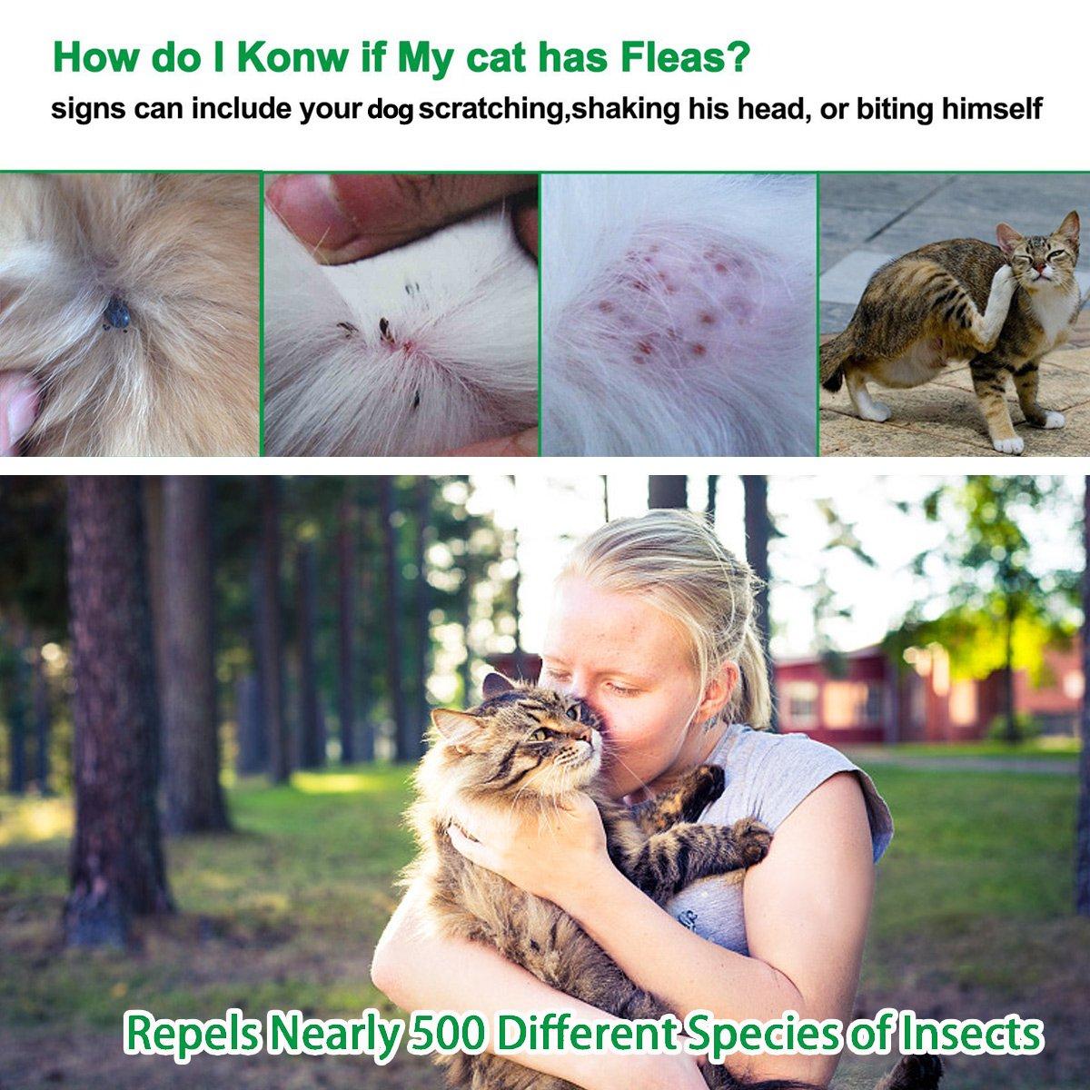 Iseebiz Collar Antiparasitario Gatos/Perros para Contrar los parásitos Pulgas, Garrapatas, Piojos y Mosquitos(S): Amazon.es: Productos para mascotas