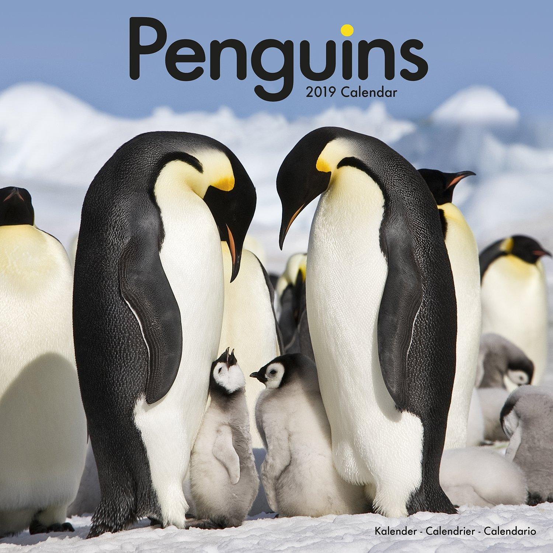 نتيجة بحث الصور عن Penguins 2019